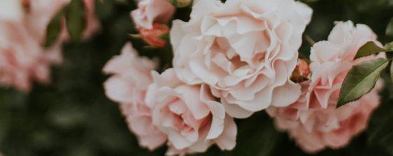 cropped-daiga-ellaby-708072-unsplash1.jpg