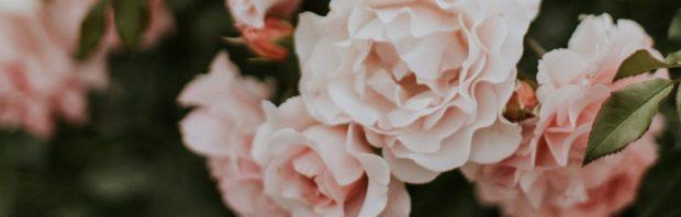 cropped-daiga-ellaby-708072-unsplash3.jpg